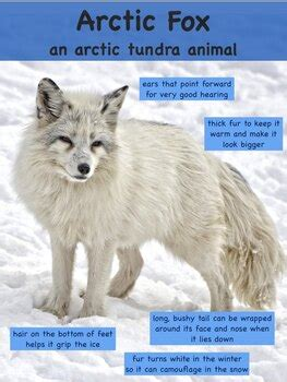 Animal Adaptation Posters by Science and STEAM Team | TpT