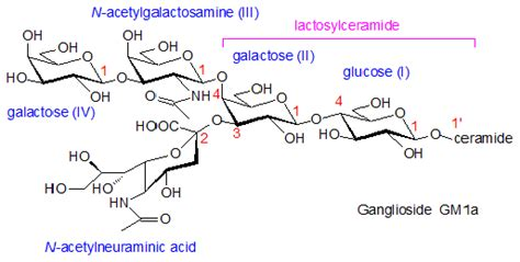 biochemistry - Where is sialic group in gangliosides that