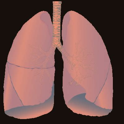Medical Pictures Info – Black Lung